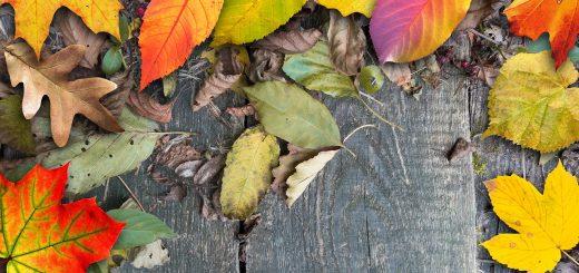 autumn-leaves5