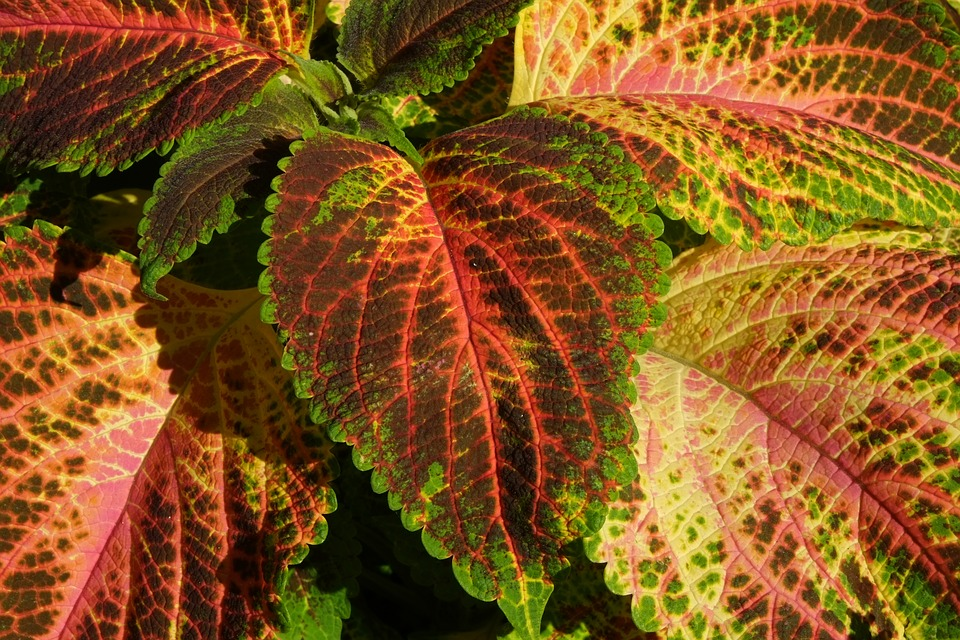 colorful-nettle