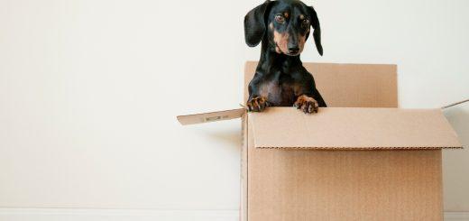 Обзаведен или необзаведем имот да търсим?