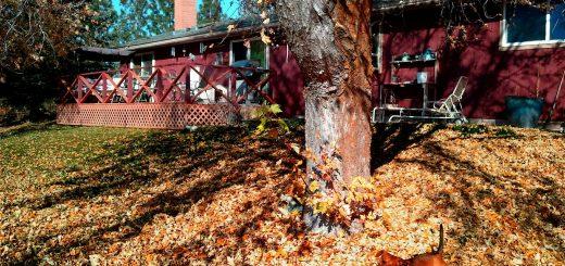 задачи у дома за есента