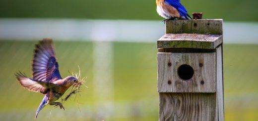 птици в двора