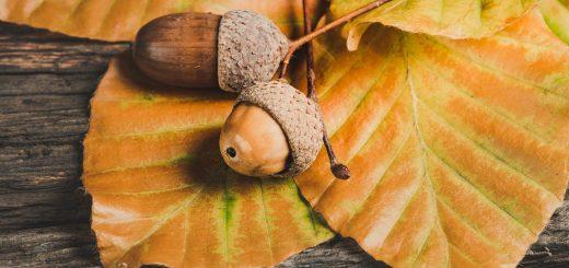 5 суеверия при преместване в нов дом