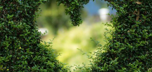 Тенденции в градското градинарство през 2021